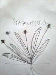 Spitzwegerich_1