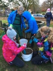 Schüler pflanzen 400 Narzissen